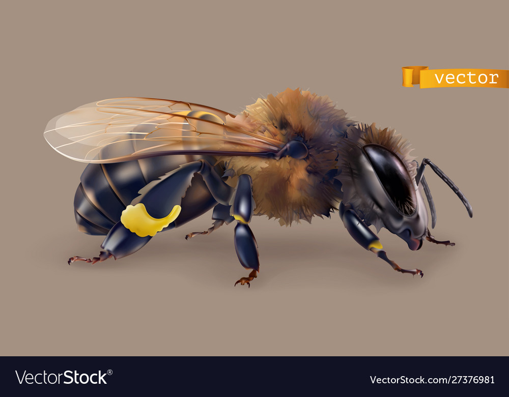 Bee 3d realistic icon