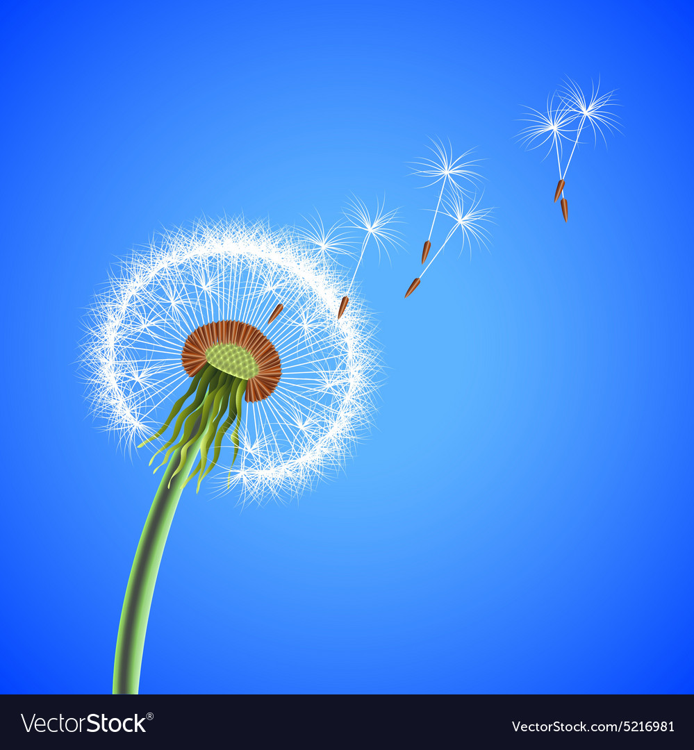 Dandelion seeds blowing away background