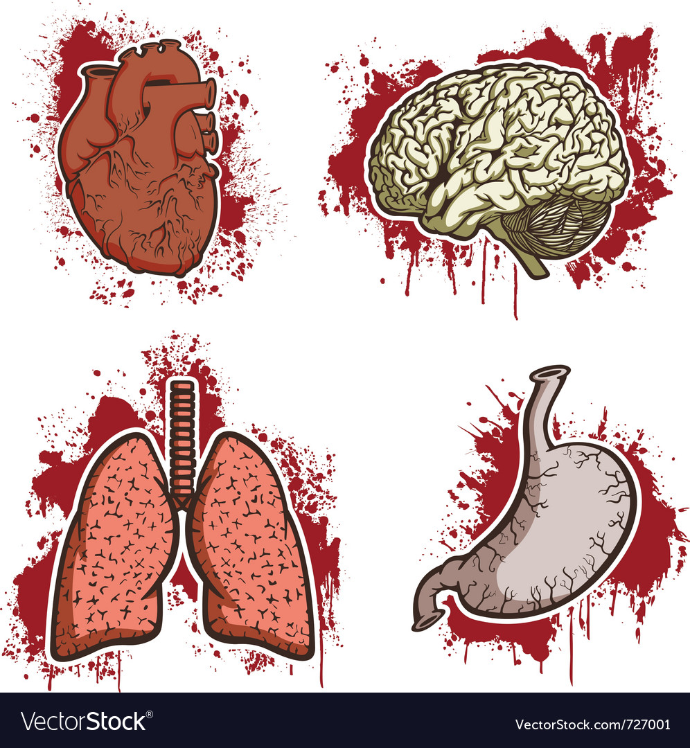 Cartoon human organs