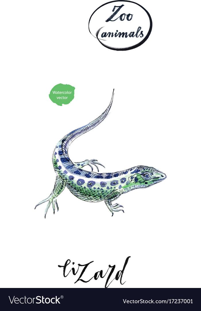 Lizard gecko in watercolor