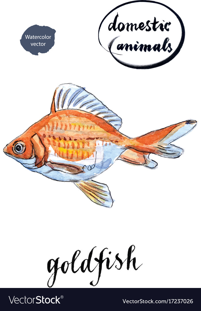Watercolor orange goldfish