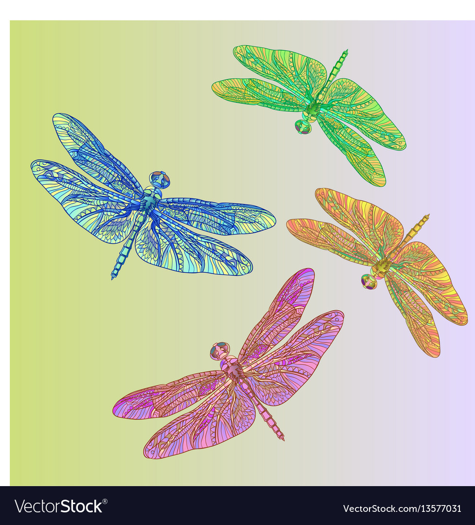 Colorful dragonflies vector image