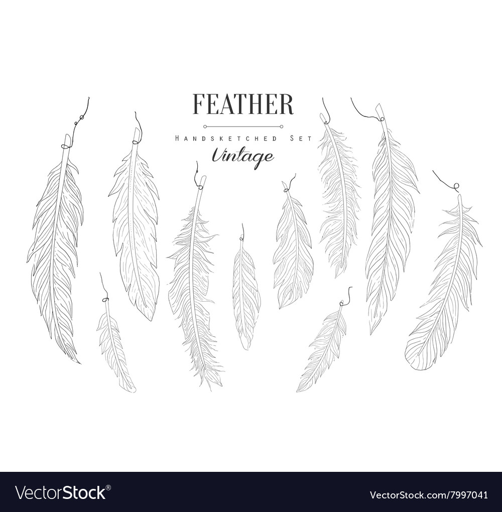 Feathers Collection Vintage Sketch