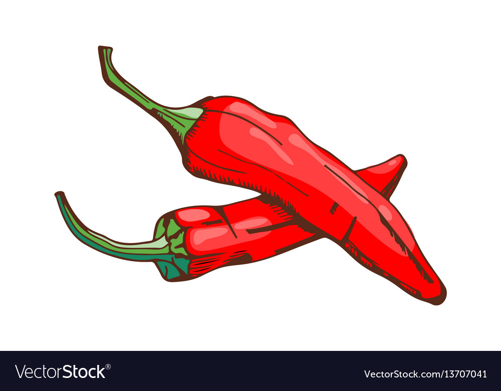 Red chilli pepper food seasoning hand drawn style