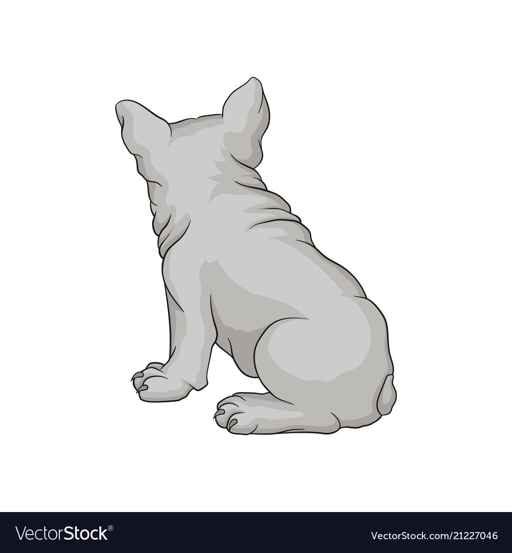 Back view of french bulldog or boston terrier
