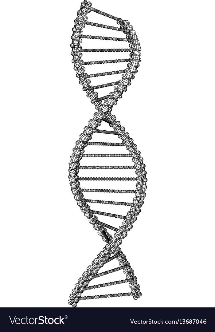 Dna molecule picture