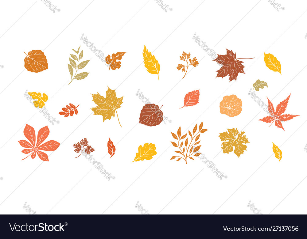 Autumn leaves set fall leaf floral icons over