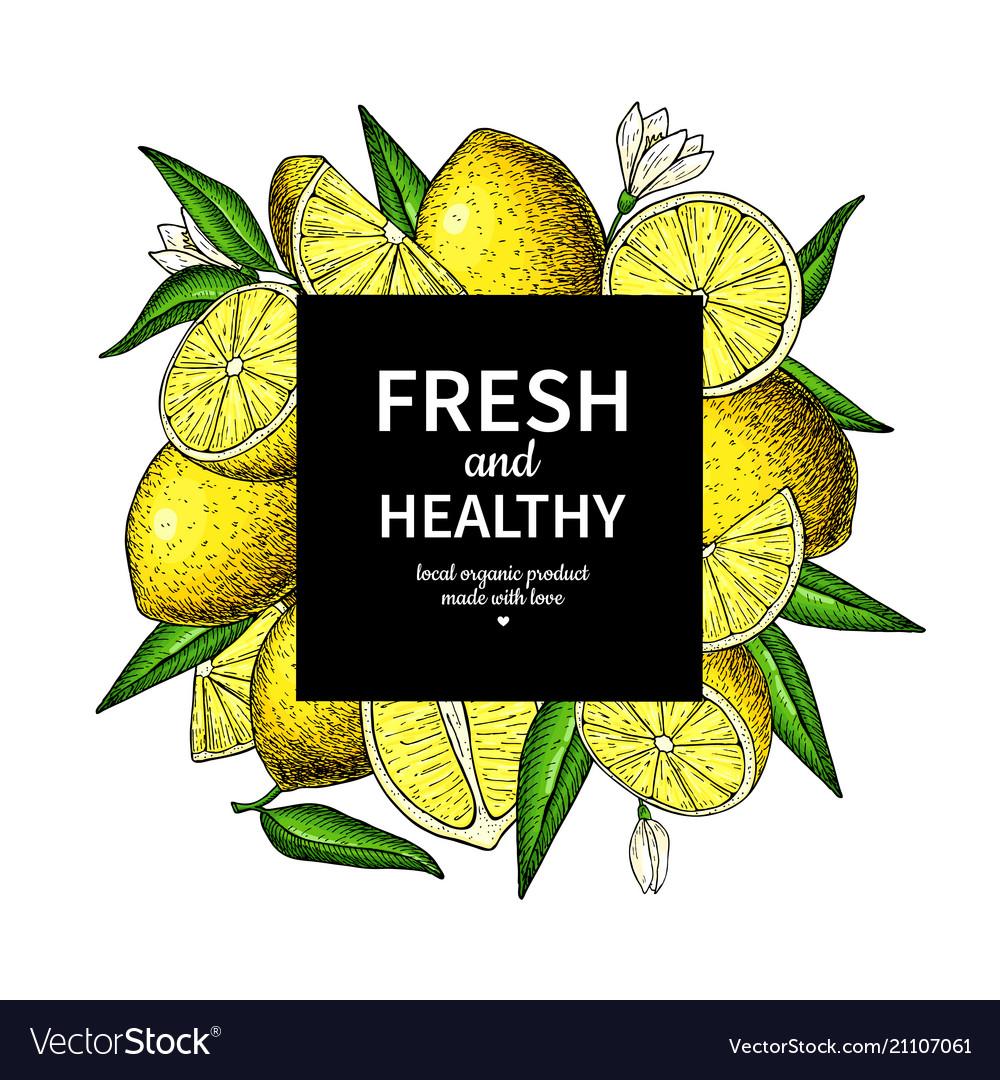Lemon frame drawing citrus fruit square