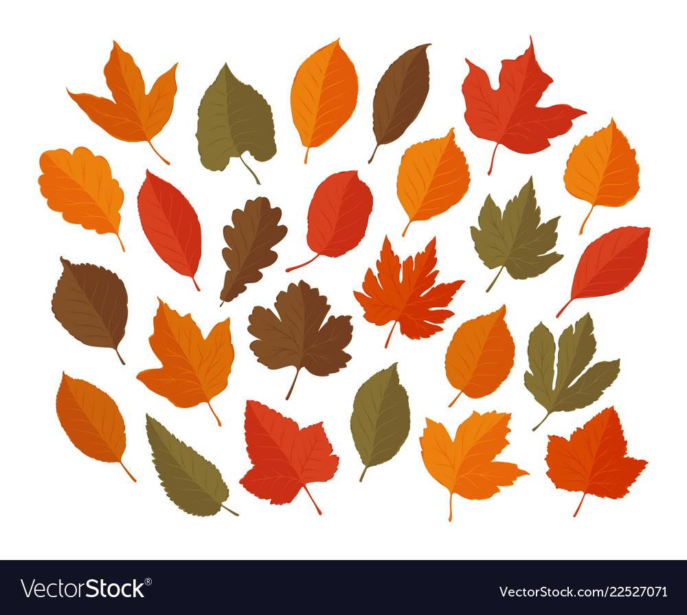 Decorative leaves set autumn leaf fall concept