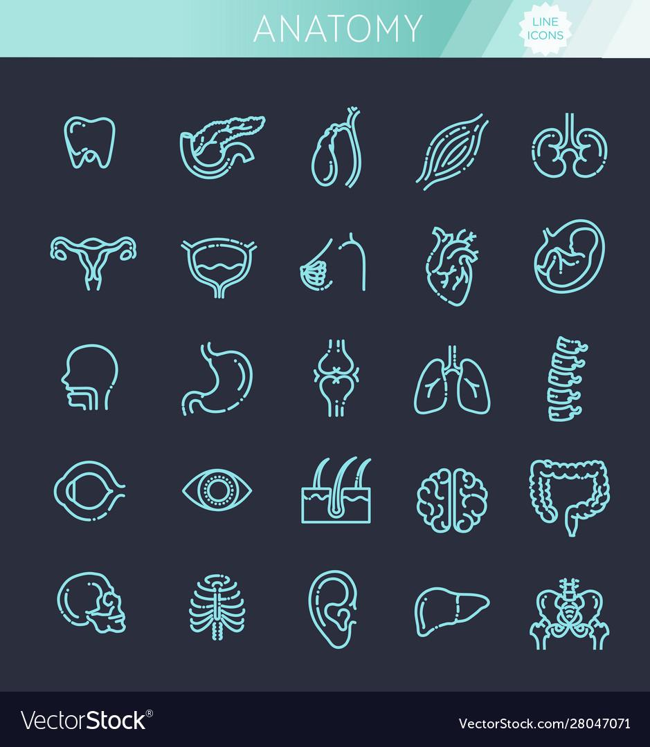 Set line icons anatomy