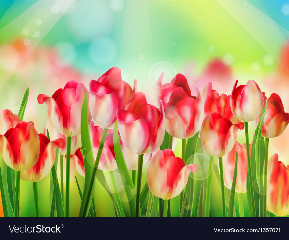 green grass blue sky flowers meadow tulips garden with grass on blue sky eps 10 vector image