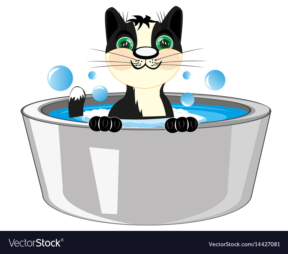 Cat is washed in basin vector image