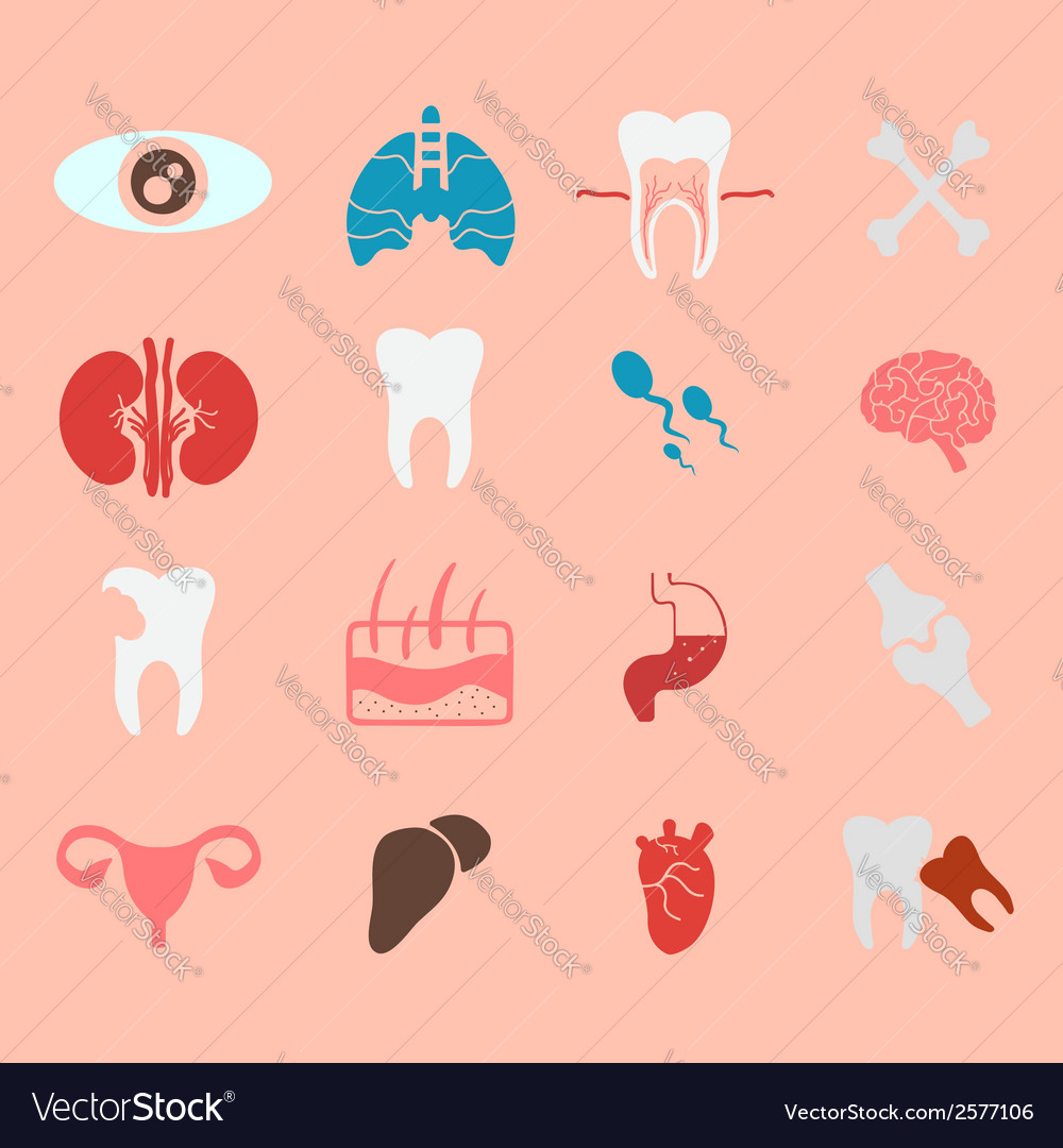 Icons Of Internal Human Organs Flat Design Vector Image
