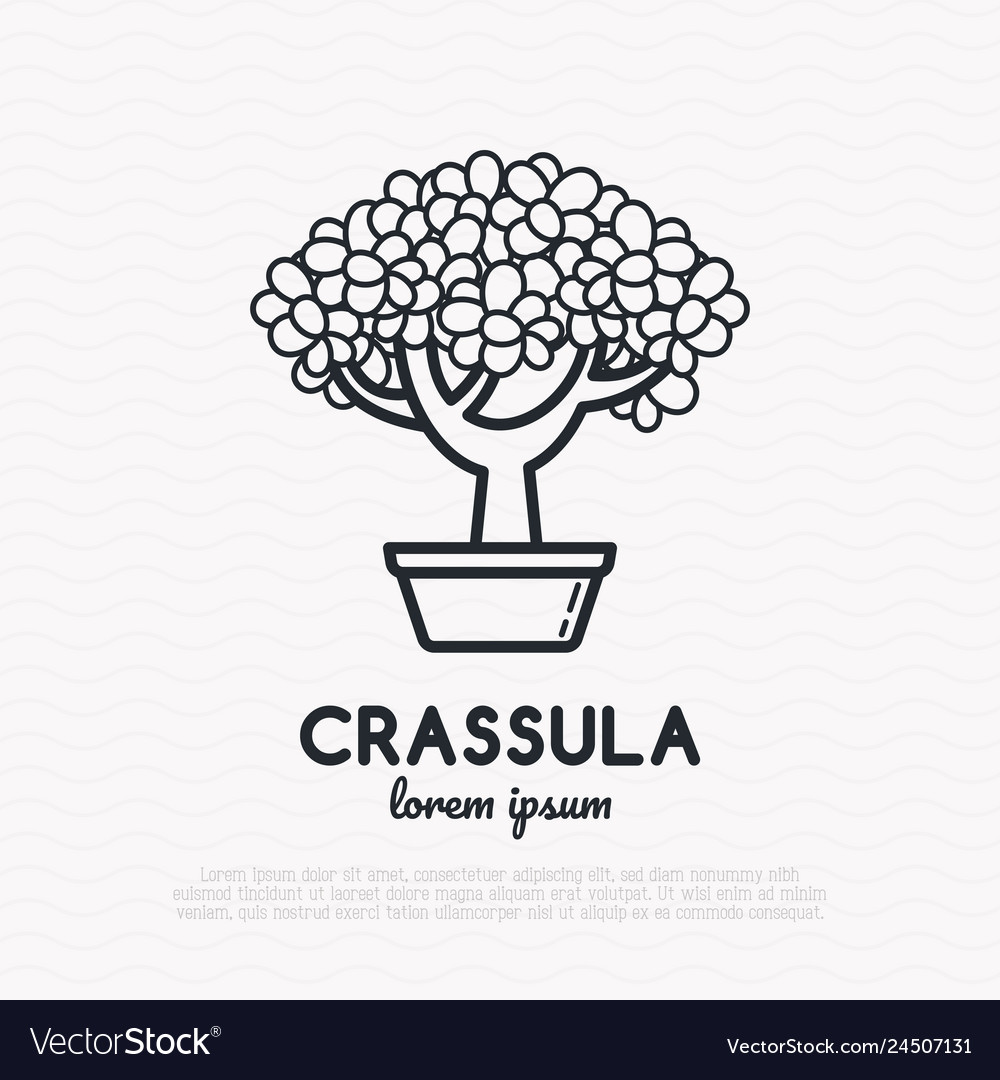 Crassula plant thin line icon