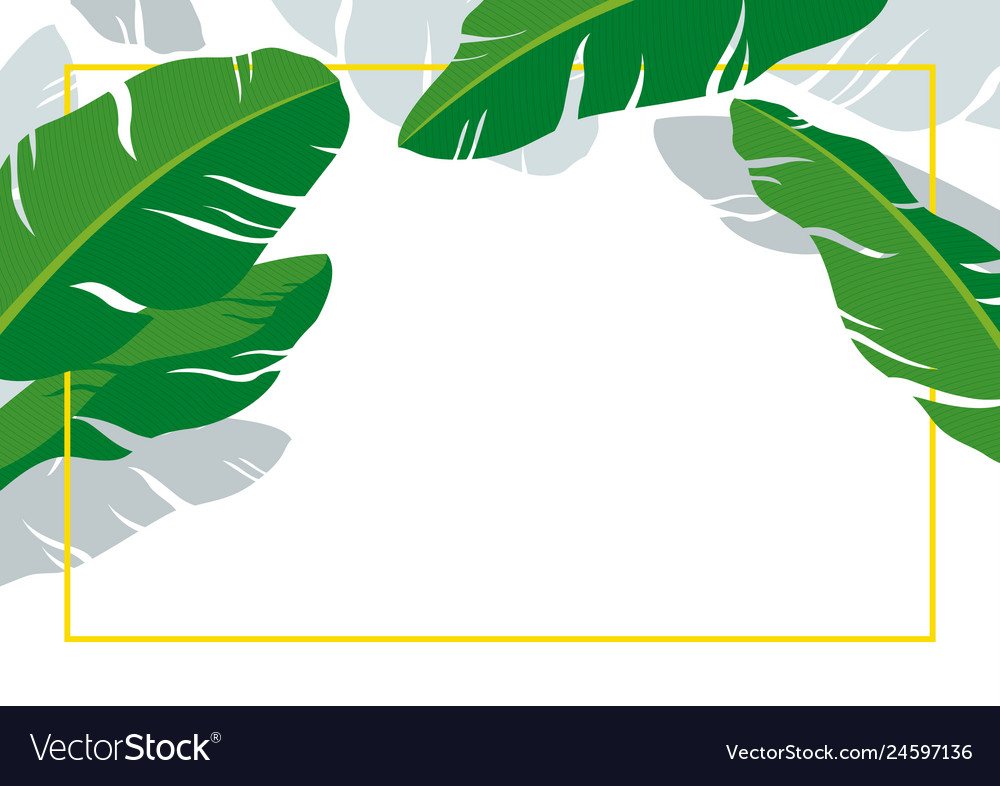 Banana leaves with line frame on white background