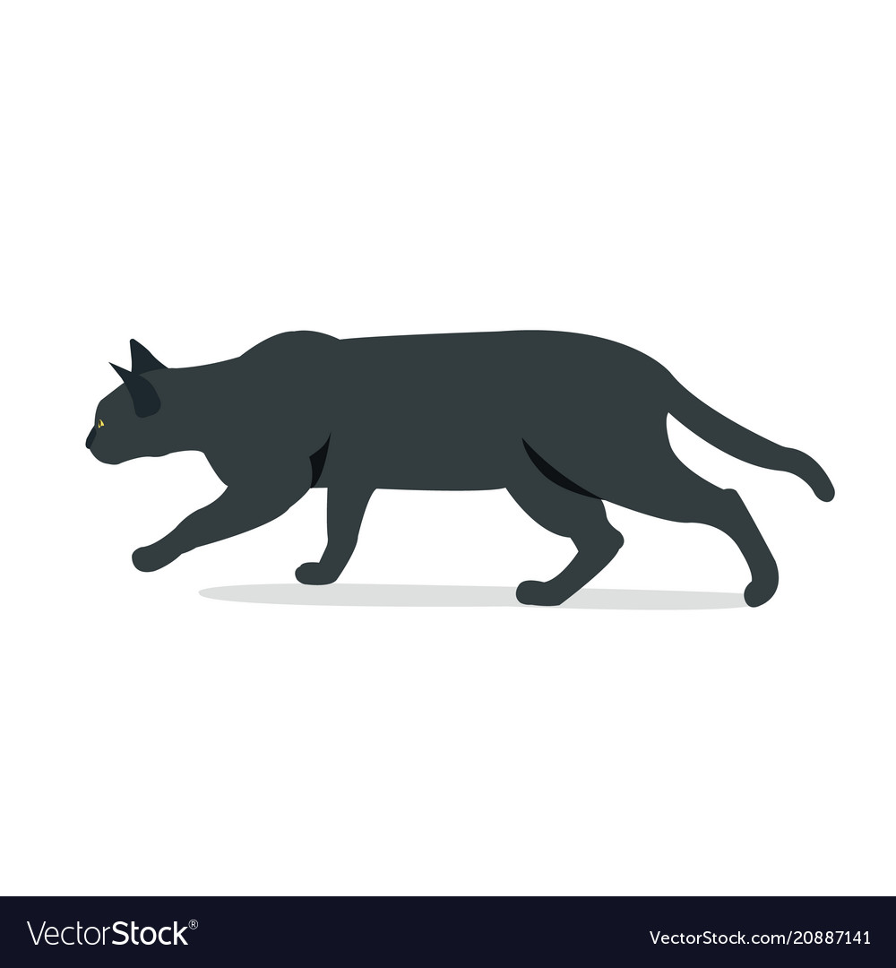 Black cat hunting with isolated white background
