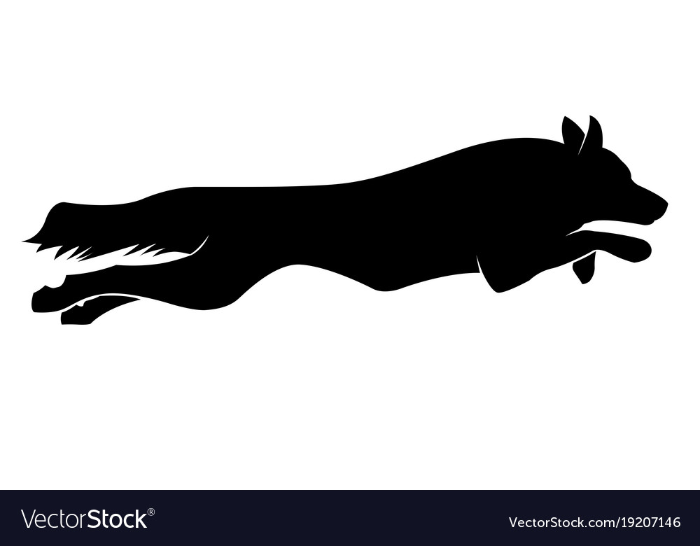 Running dogs silhouette border collie