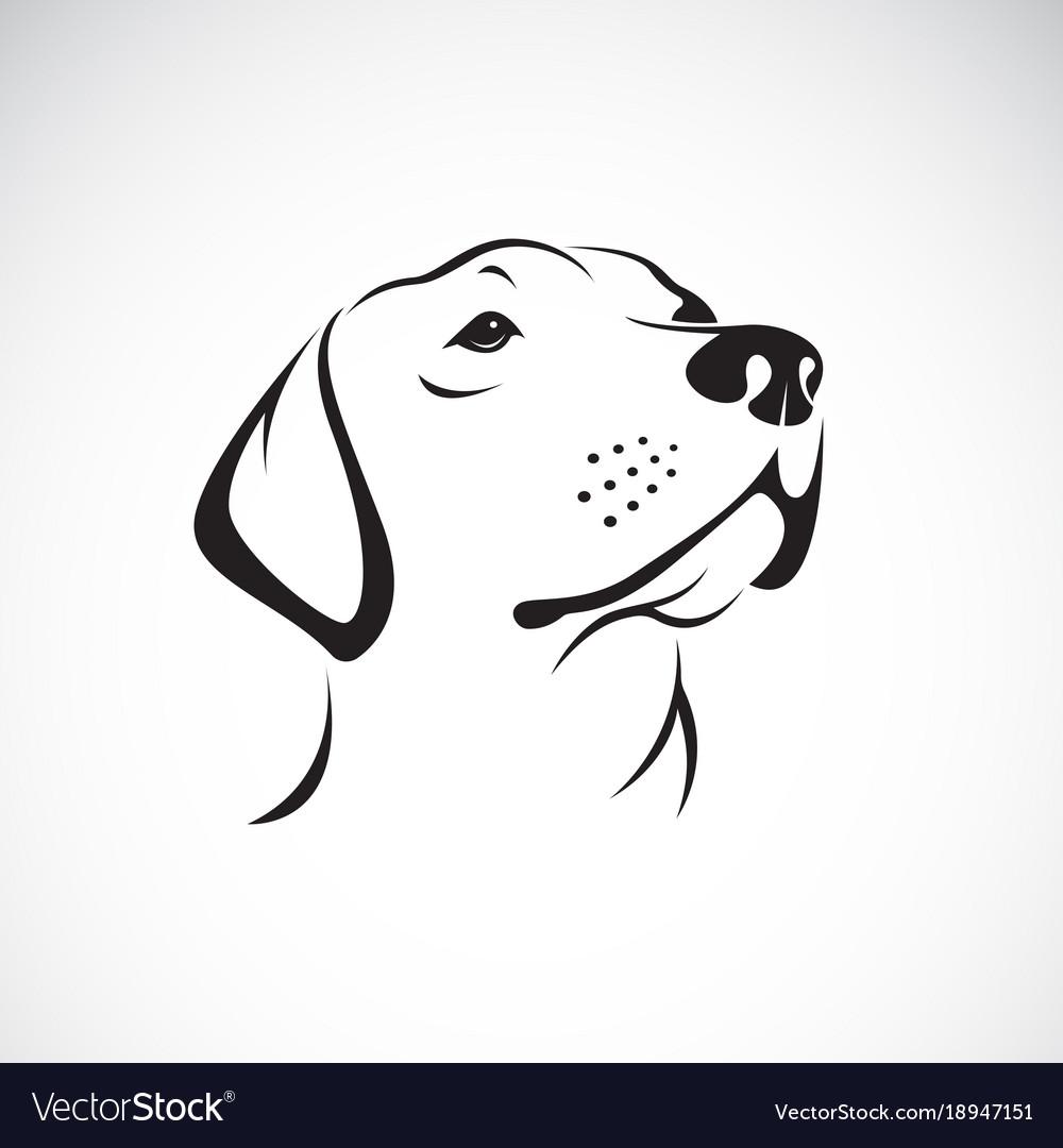 Dog headlabrador retriever on white vector image