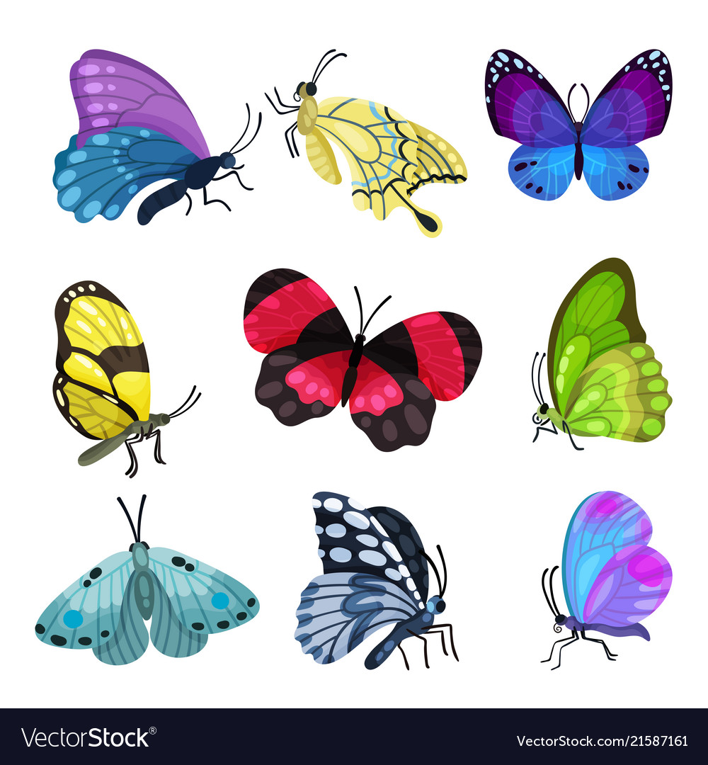 Colorful butterfly set beautiful flying insects