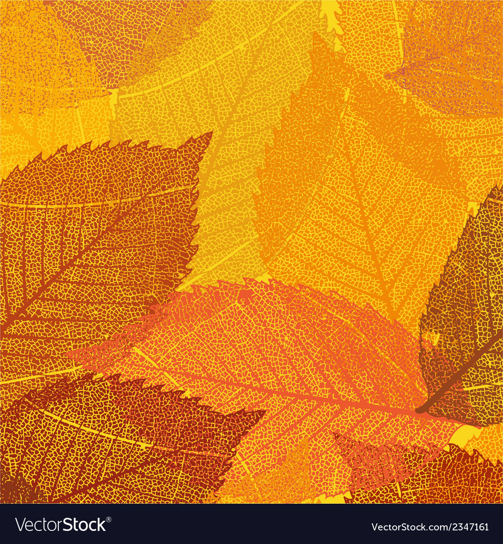 dry autumn leaves template eps 8 royalty free vector image