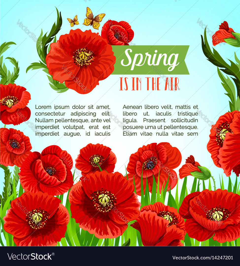 Greeting Poster Of Spring Poppy Flowers Royalty Free Vector