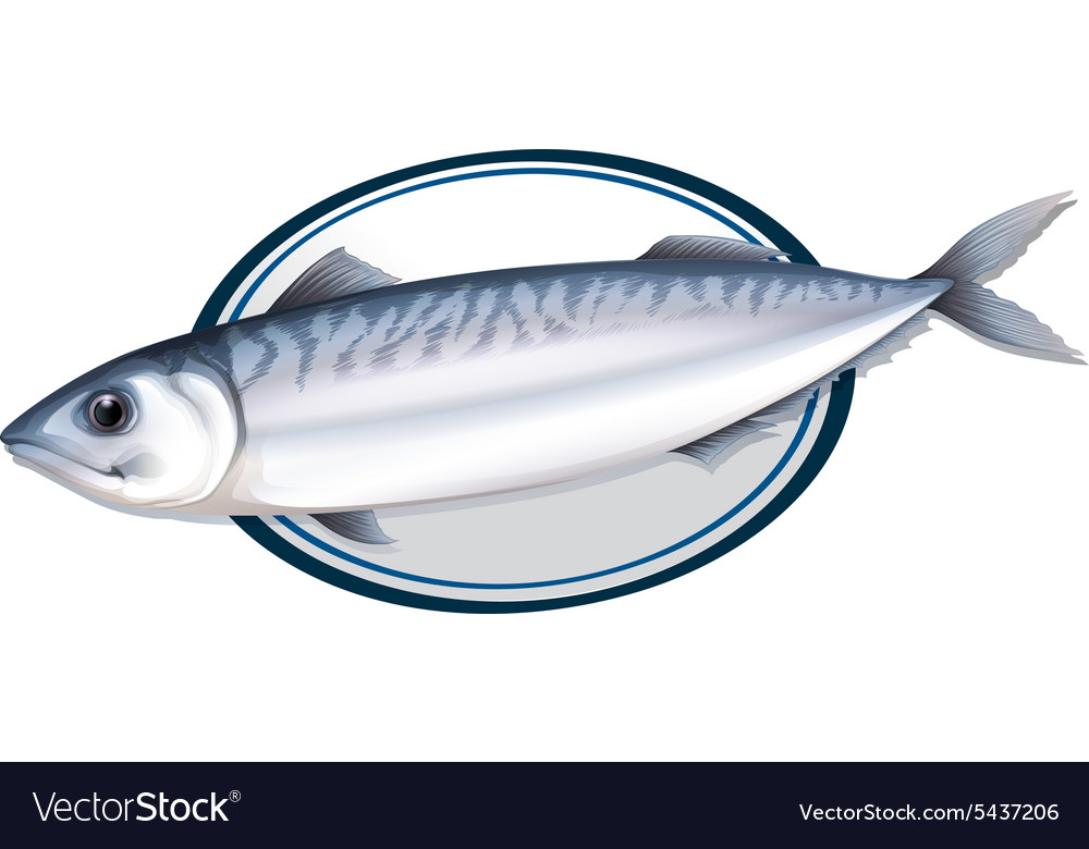 Sardine fish on a plate vector image