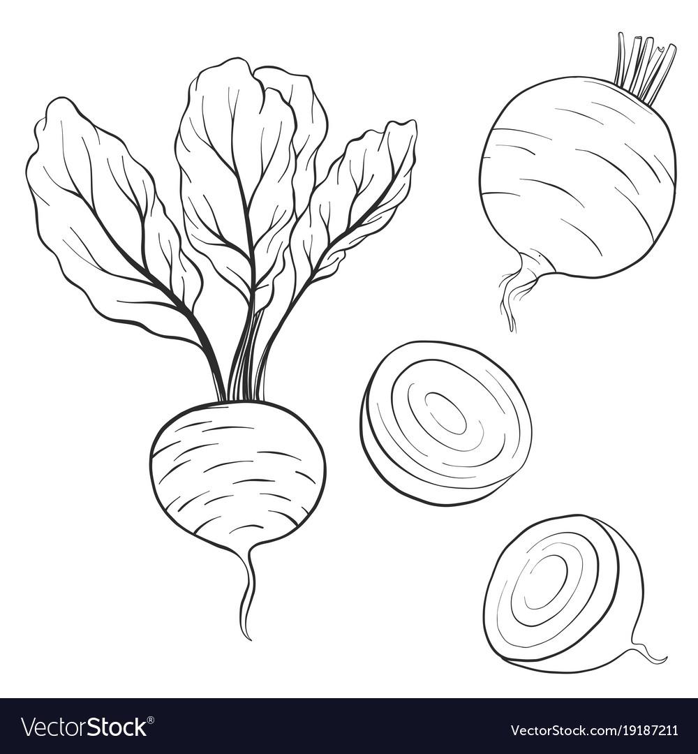 Drawing beets