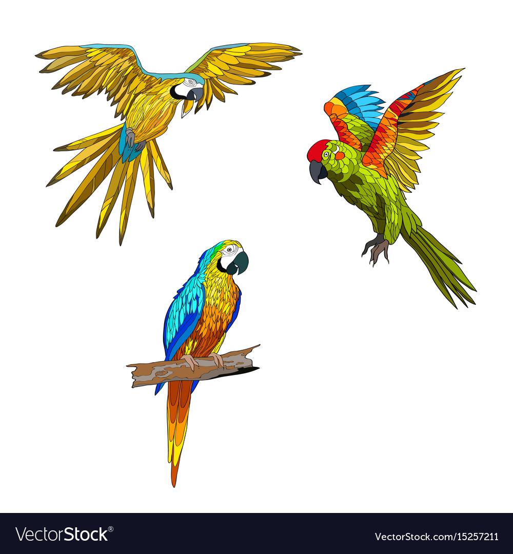 Set of parrots flying