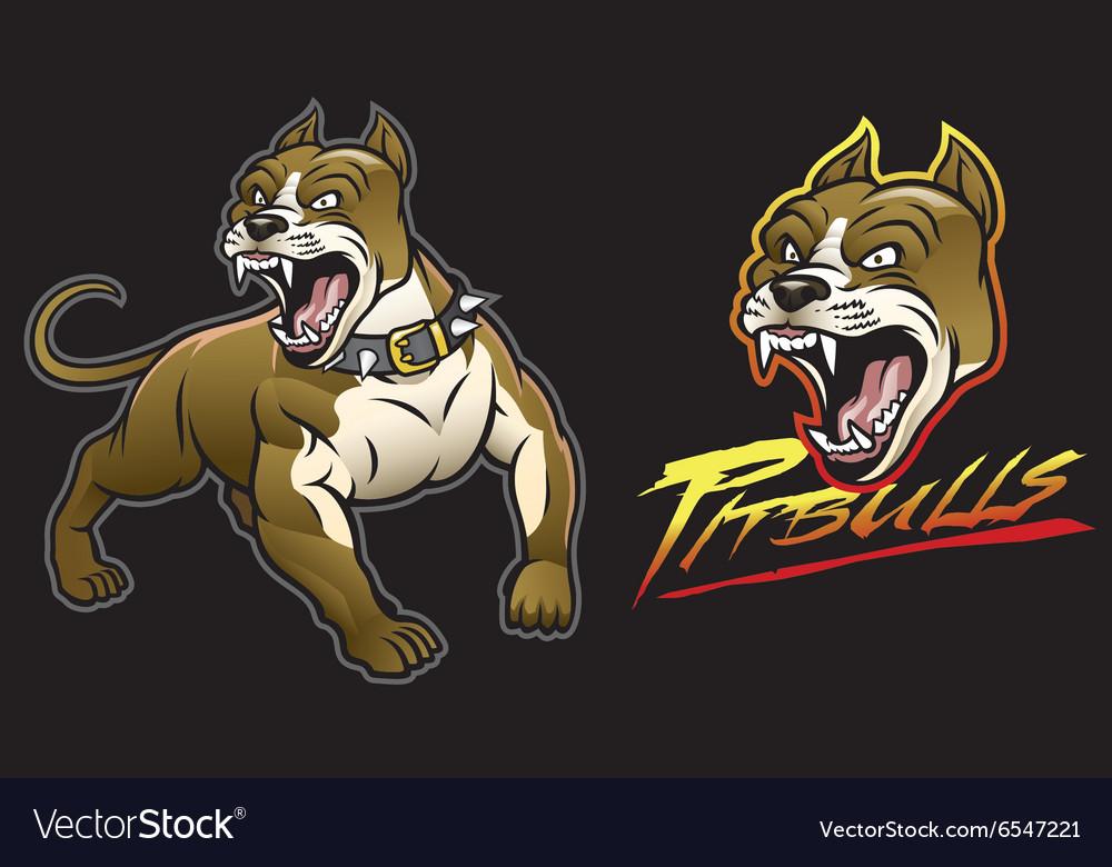 Pitbull dog angry