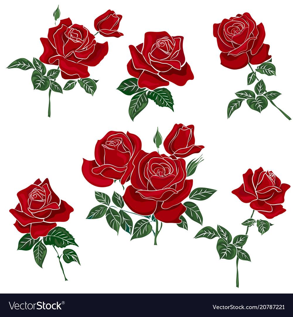 Set red rose