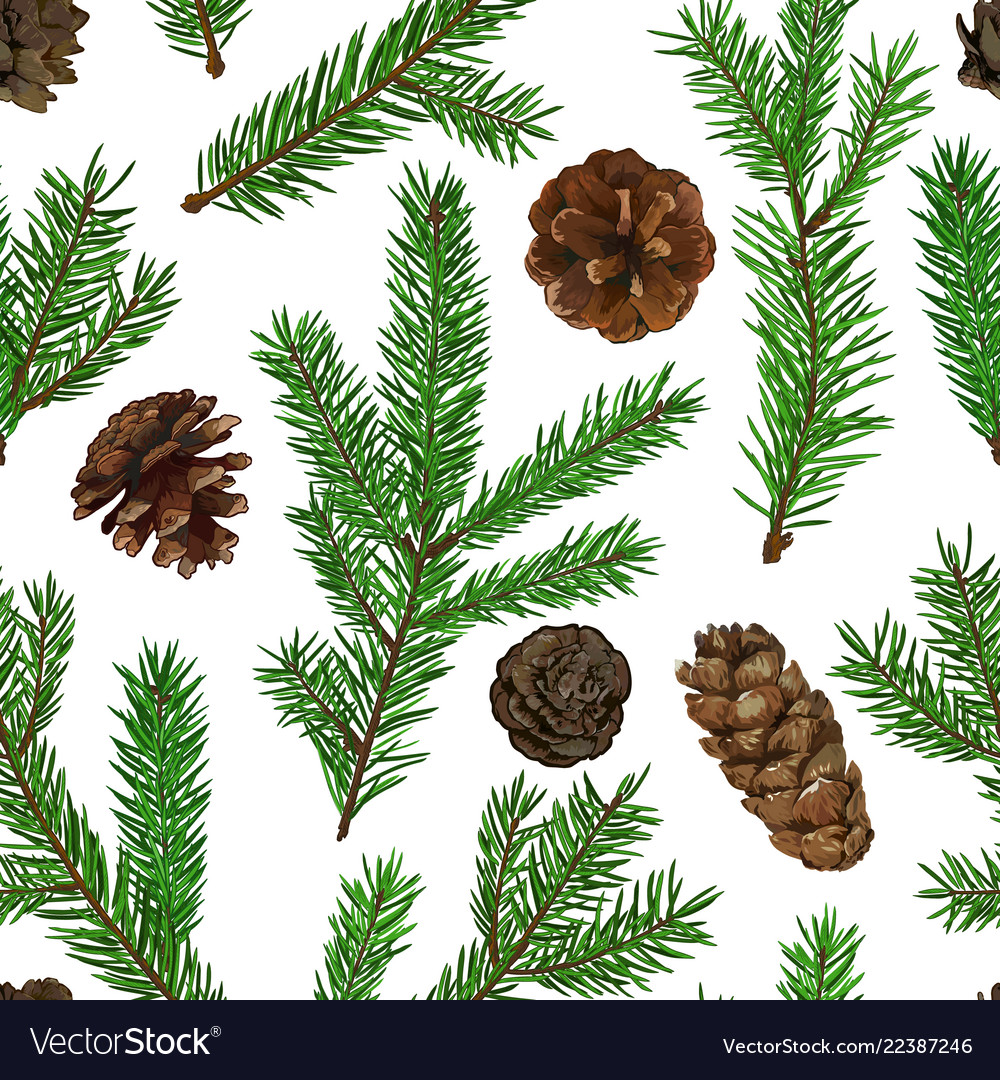 Realistic green fir tree branches and cones