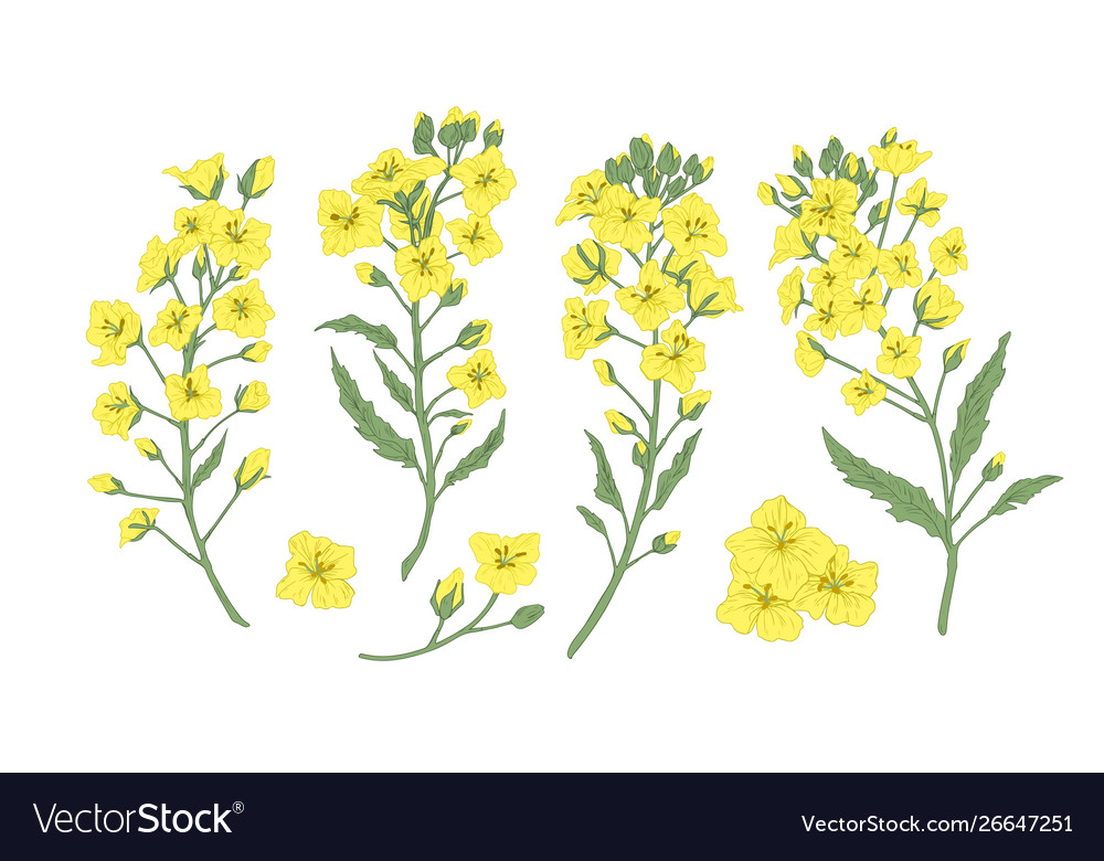 Bundle elegant botanical drawings blooming
