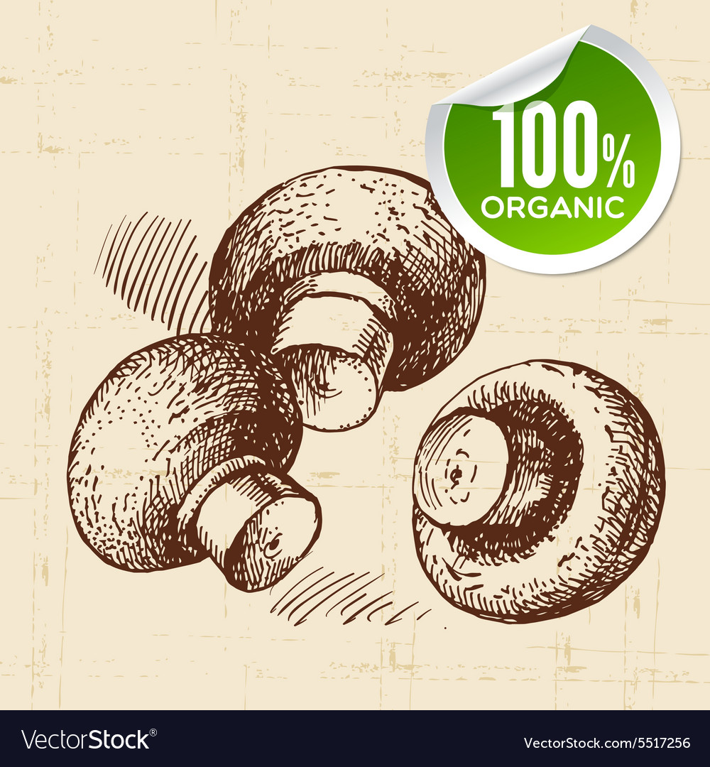 Hand drawn sketch vegetables mushrooms Eco food