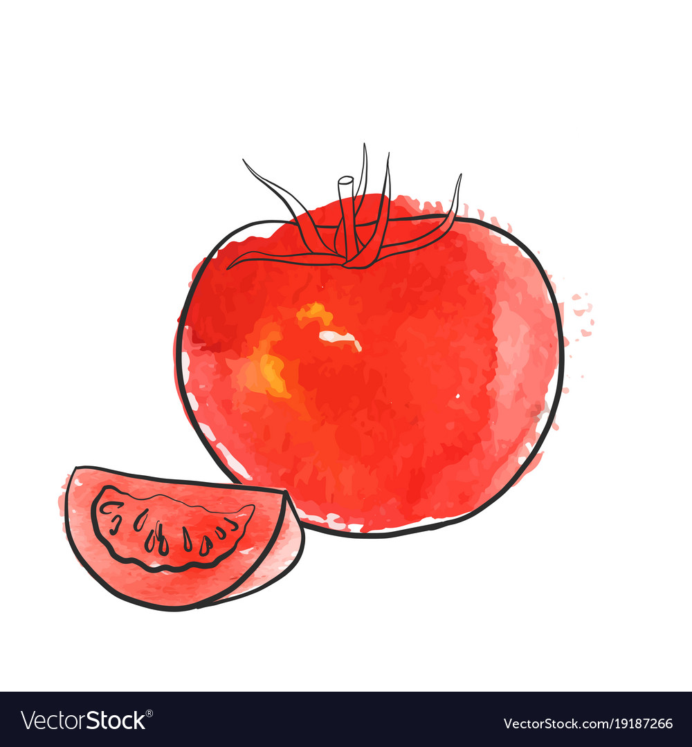 Drawing tomato