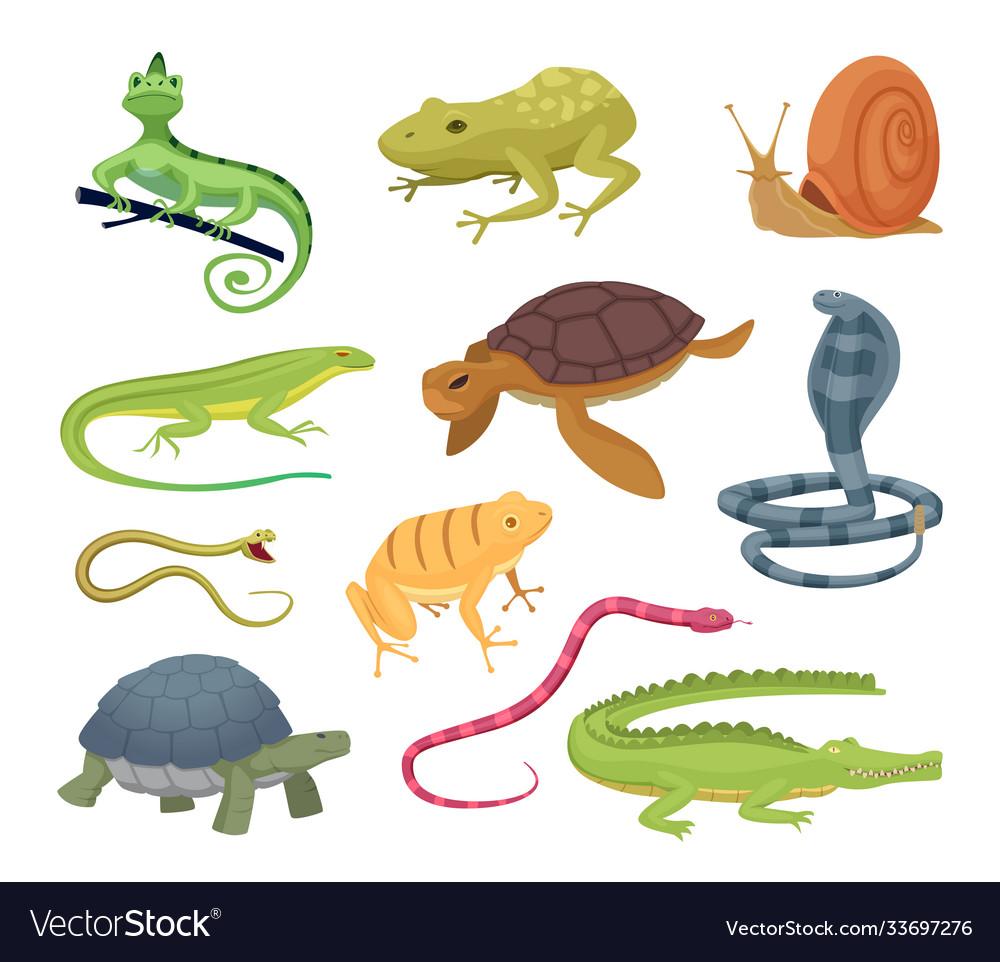 Amphibia and reptiles wild animals turtles