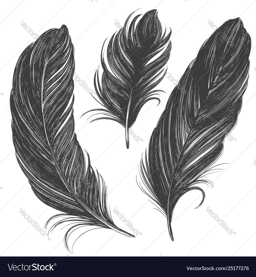 Black feathers set hand drawn