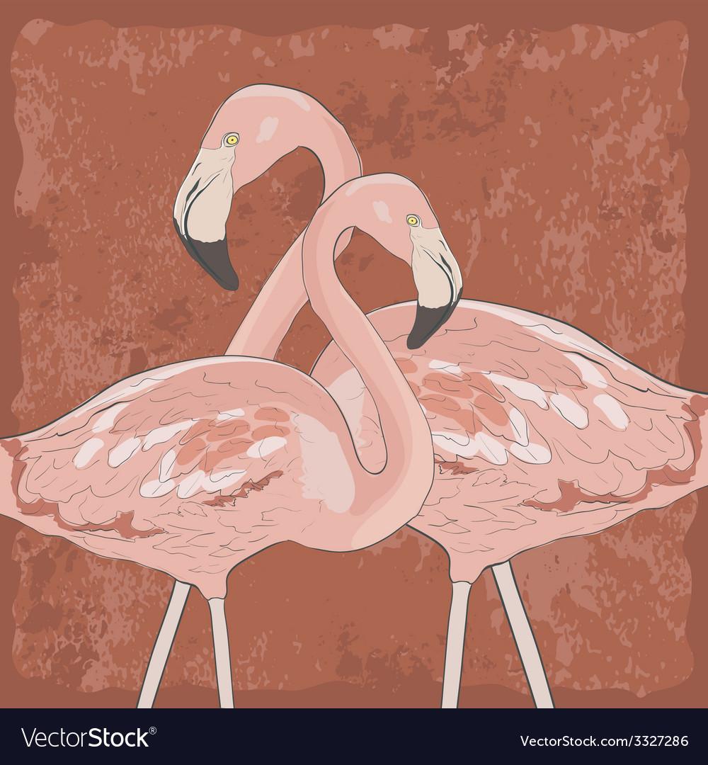 FlamingoAkva8