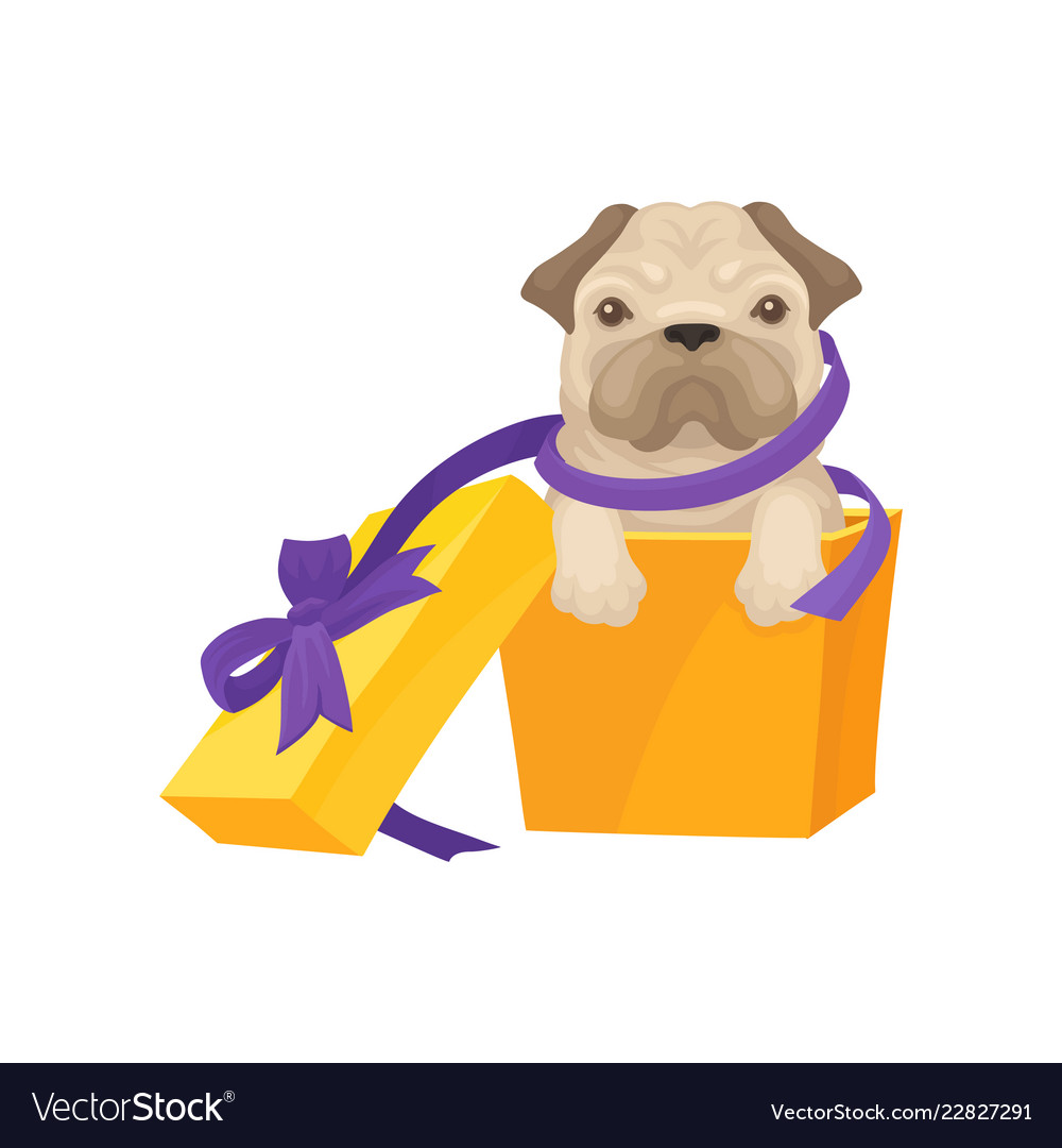 Funny Pug Puppy Get Out Bright Orange Gift Box Vector Image