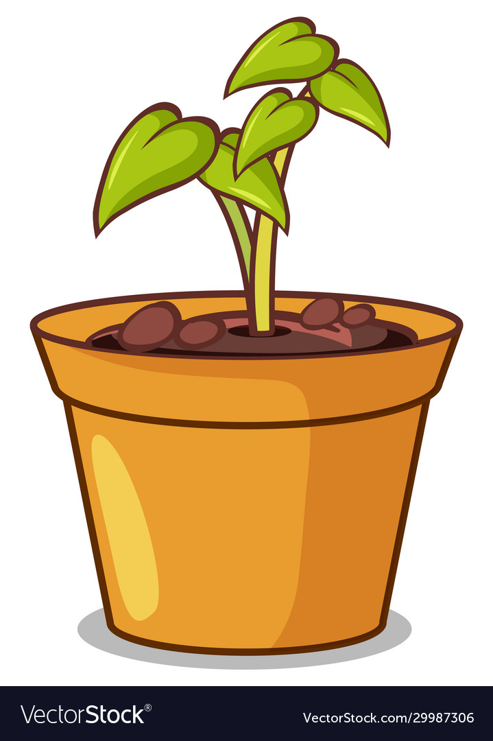 Potted Plant With Small Plant On White Background Vector Image