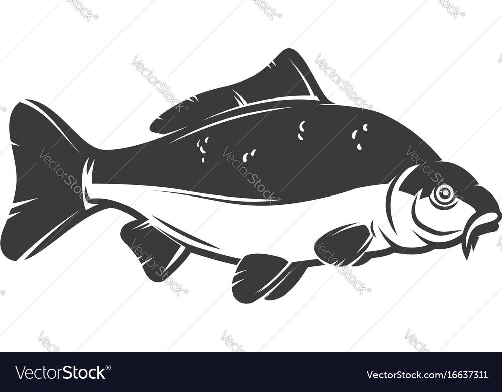 Carp fish isolated on white background design