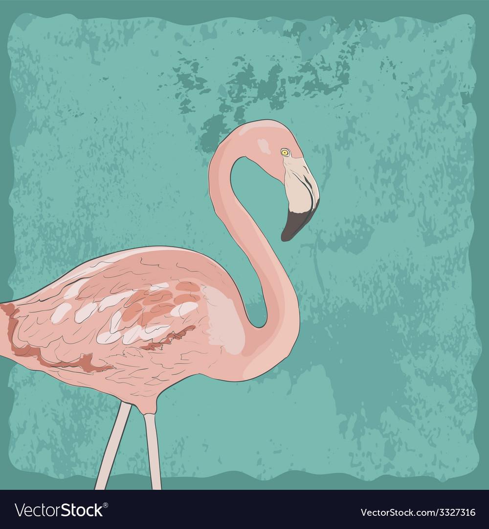 FlamingoAkva2