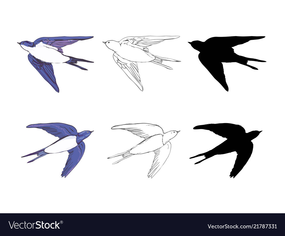 Set of the swallow icons design elements for