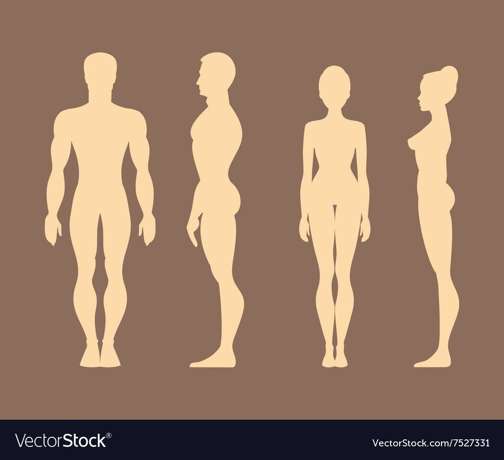 Silhouettes Of Men And Women Anatomy Royalty Free Vector