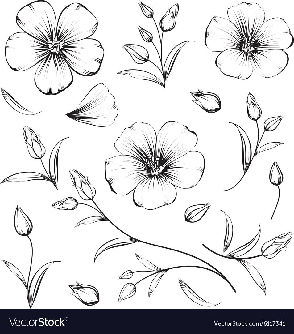 Collection sakura flowers set