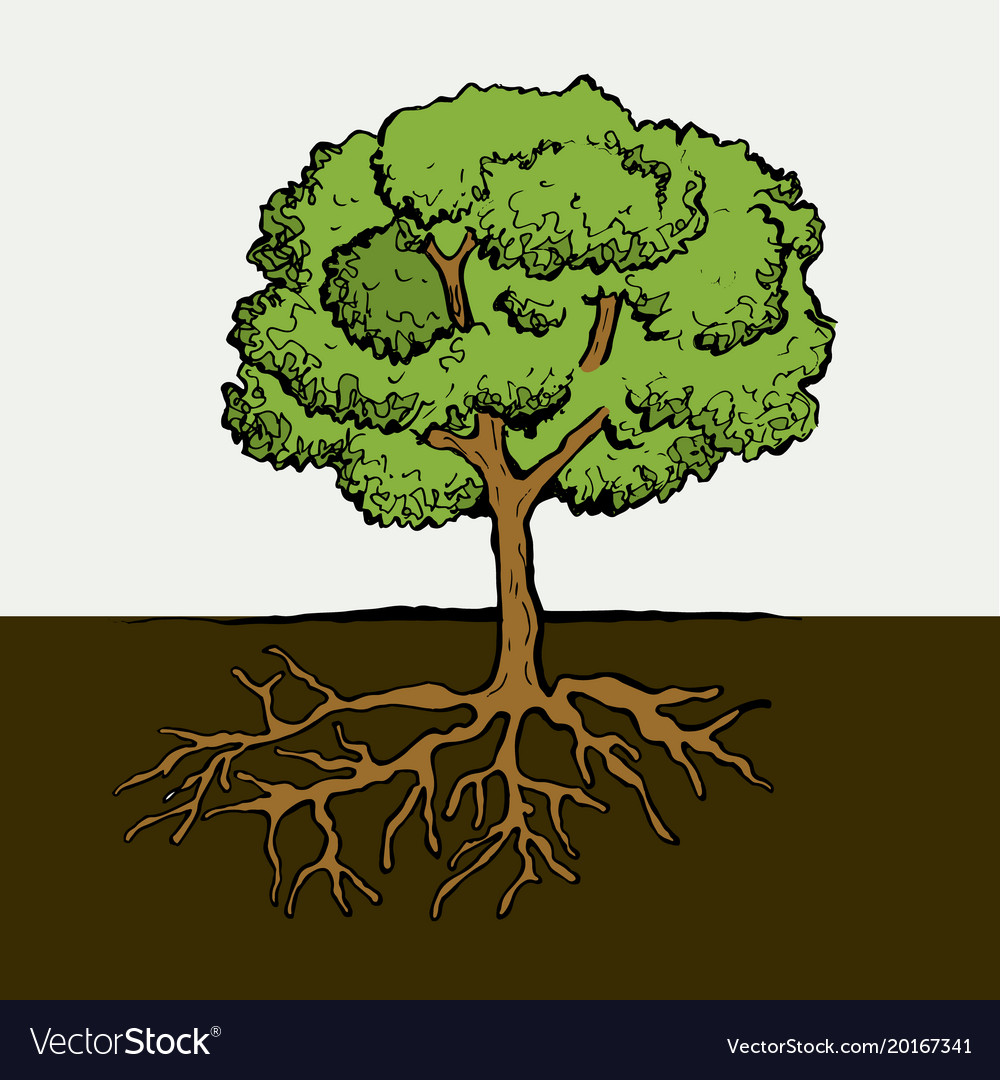 Tree with roots and leafs image Royalty Free Vector Image