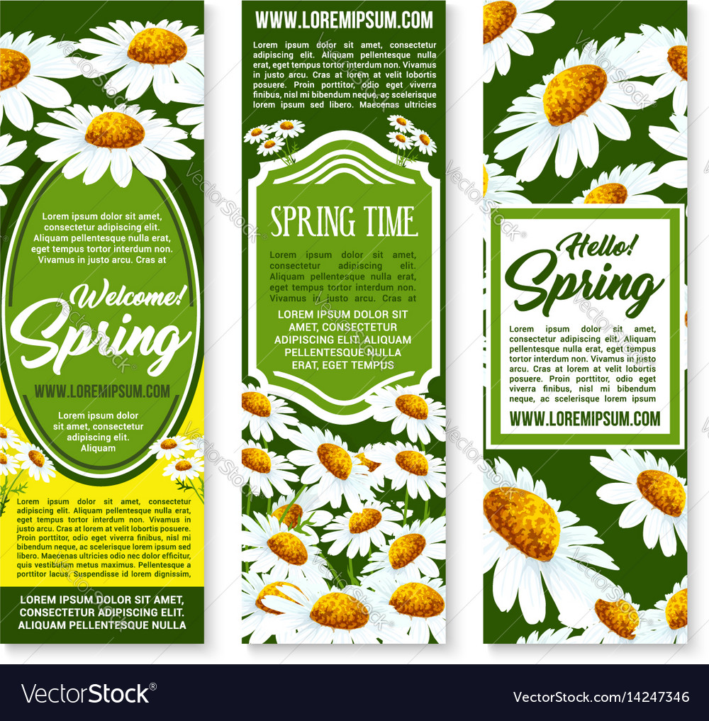Spring Flower Banner With Daisy Floral Background Vector Image