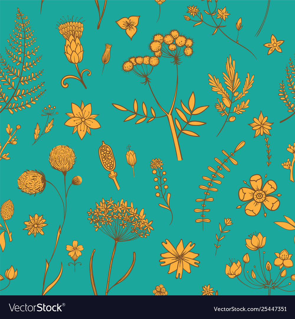 Herbs and wild flowers botany pattern