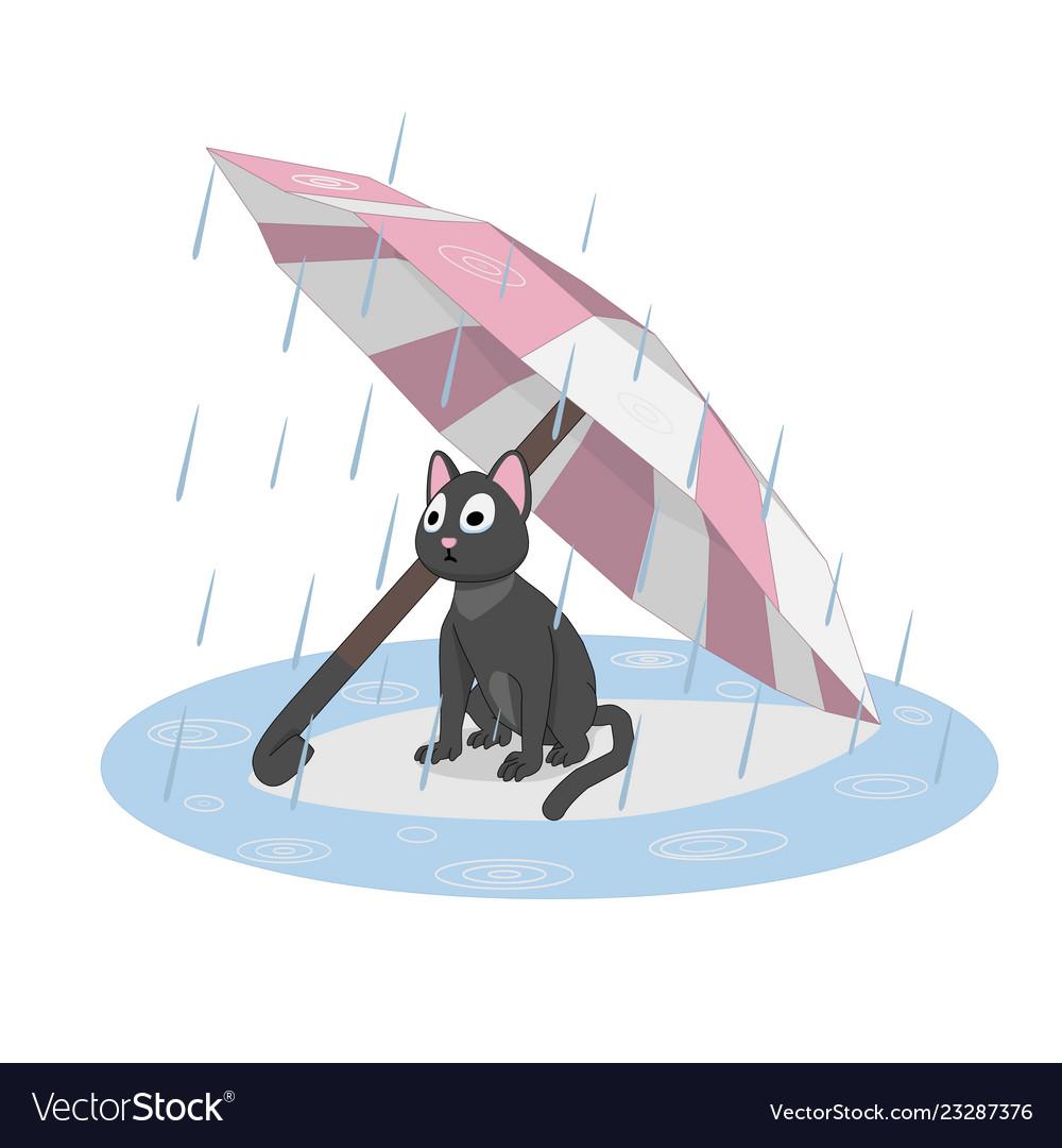 Cat under an umbrella rain