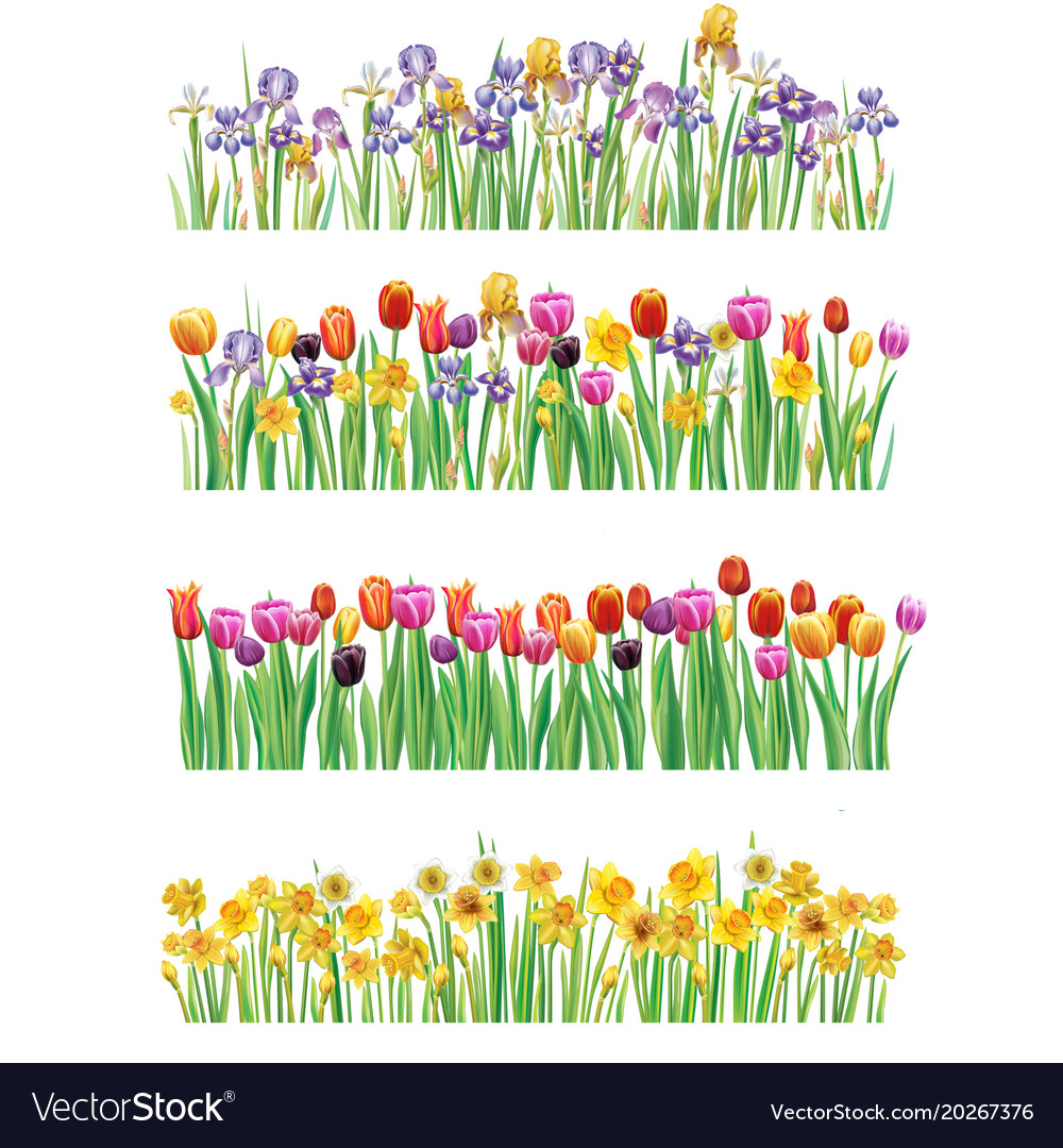 Set of borders with multicolor spring flowers vector image mightylinksfo