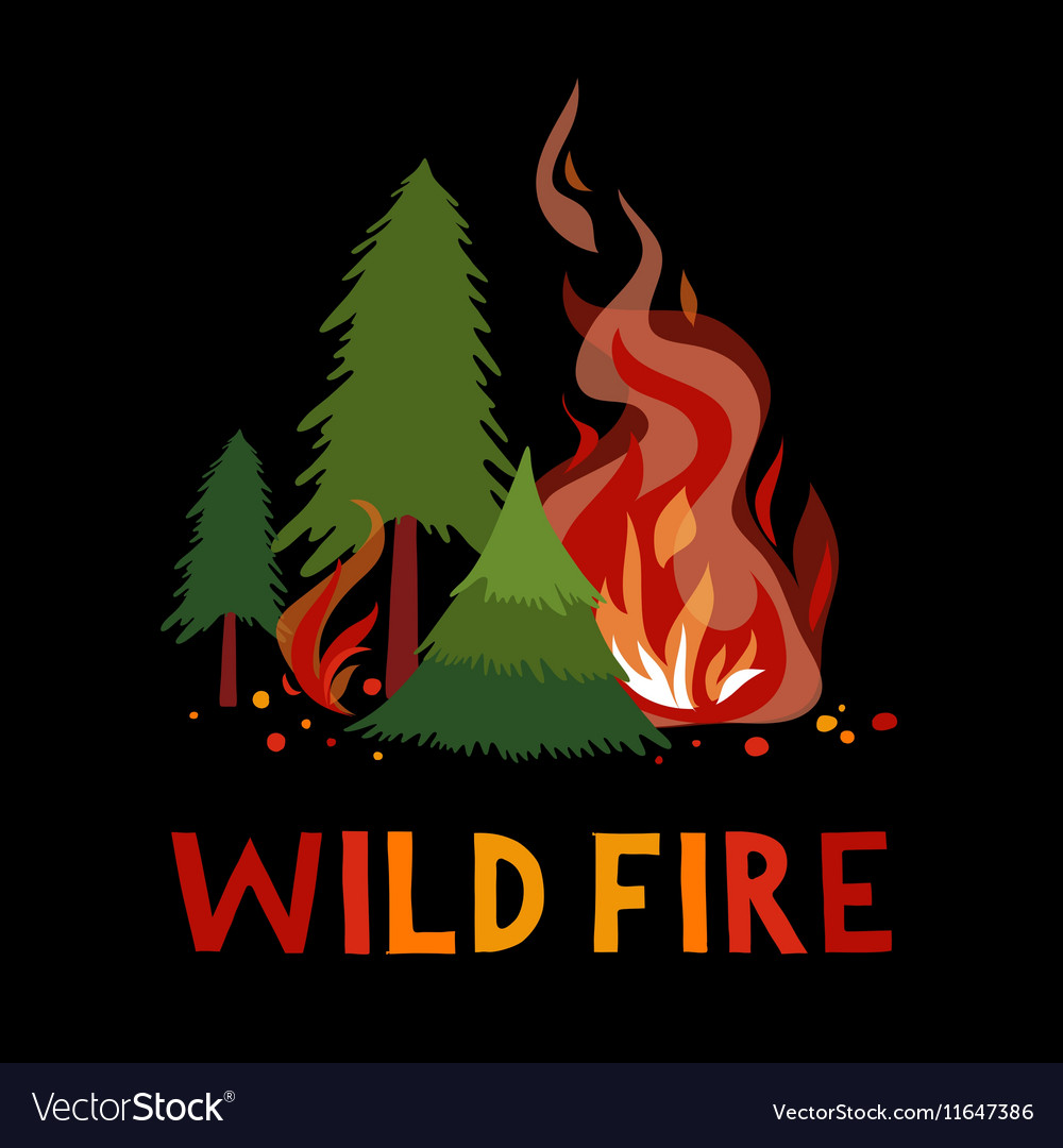 Wild fire in a forest